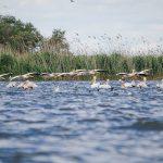 Excursie de o zi în Rezervația Biosferei Delta Dunării