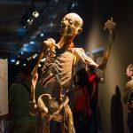 "Lecția de anatomie, ""Our Body"", a ajuns la City Park Mall"