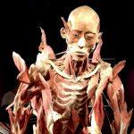 Our Body: Universul Interior o expoziție interesantă City Park Mall