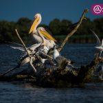 Excursie de o zi în Delta Dunării – Day Trips Constanța